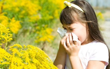 Światowy Dzień Immunologii – jak działa układ immunologiczny w alergii?