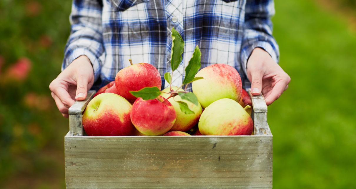 Jedz dwa jabłka dziennie. Tak obniżysz cholesterol